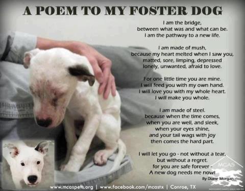 Foster a pet