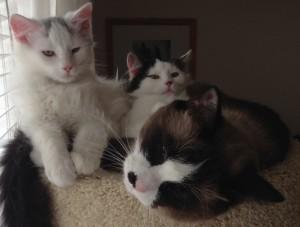 KittiesHT2