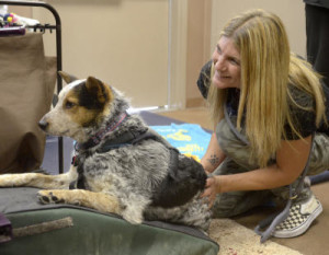 dh052215e/a-sec-metro/05/22/2015---Angela Stell (CQ) president and director of NMDog with Cubby, photographed on Friday May 22, 2015. (Dean Hanson/Albuquerque Journal)