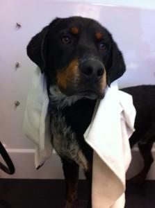 Wrangler gets a bath