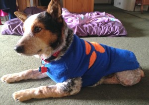 Cubby all warm and toasy in his foster home.