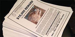 $10,000 Reward in Cruelty Case