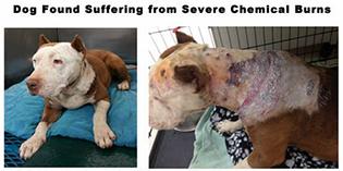 Extreme Cruelty: Anya