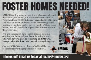 foster homes needed flyer