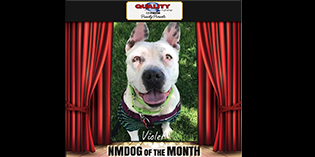 Quality Mazda Dog of the Month: Violet