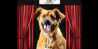 Quality Mazda Dog of the Month: Raina