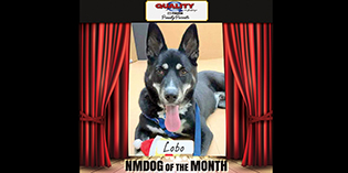 Quality Mazda Dog of the Month June: Lobo