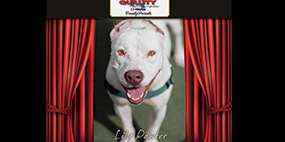Quality Mazda Dog of the Month July: Lily Pawter