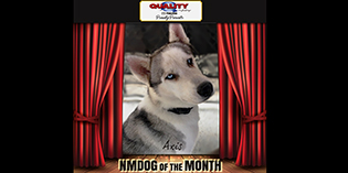 Quality Mazda Dog of the Month September: Axis