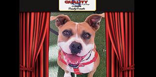 Quality Mazda Dog of the Month: Nikki