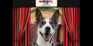 Quality Mazda Dog of the Month: Hunter!