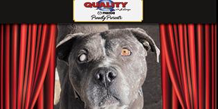 Quality Mazda Dog of the Month: Pilgrim