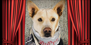 Quality Mazda Dog of the Month: Blossom