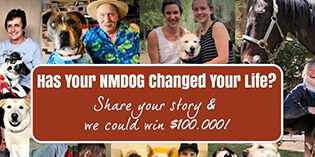How has your NMDOG changed your life? Tell us all about it!
