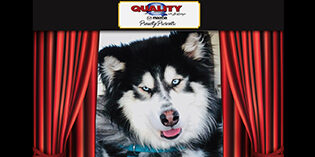 Quality Mazda Dog of the Month: Roadie