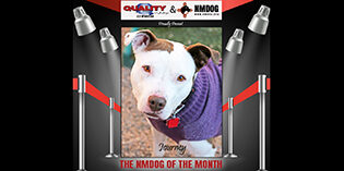 Quality Mazda Dog of the Month: Journey